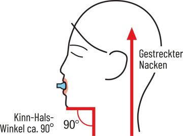Kopf aufgerichtet und Nacken gestreckt